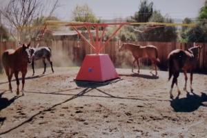 4-horse-hw-1
